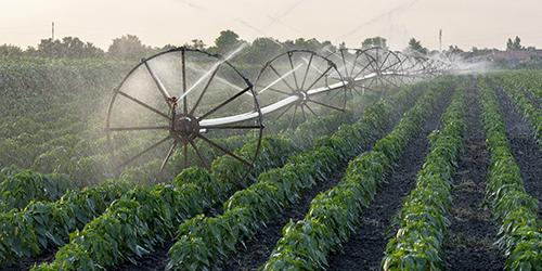Ilustracja do informacji: Złóż wniosek o dotacje na nawadnianie gospodarstw